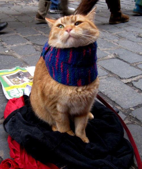 книга, «Уличный кот по имени Боб», Джеймс Боуэн